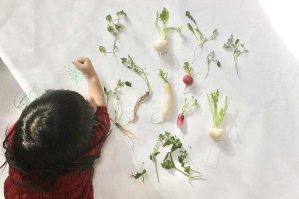 子どもと春の七草