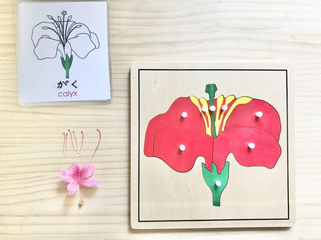 モンテッソーリ 花パズル